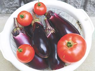 ナスとトマトの収穫